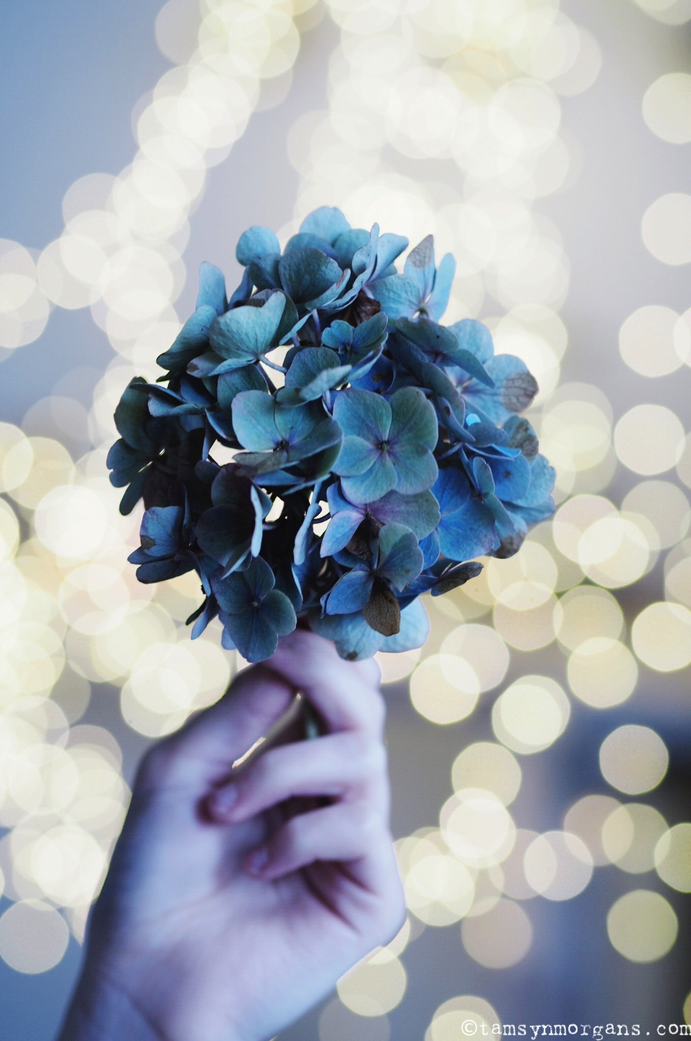 Hydrangea and Sparkles