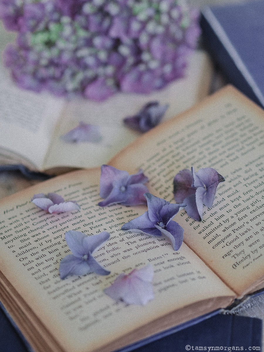 Hydrangea petals and books