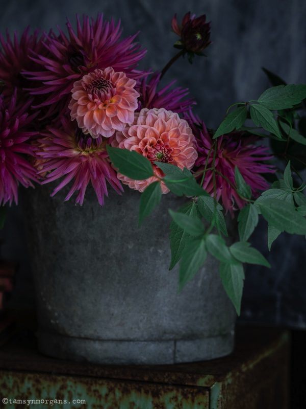 Homegrown orange and pink dahlias