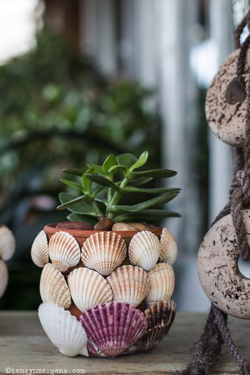 Handmade shell plant pots