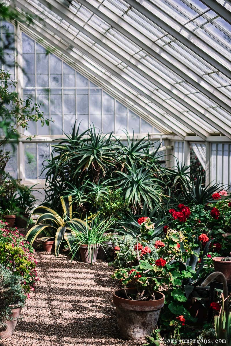 Glasshouse at Blickling Hall