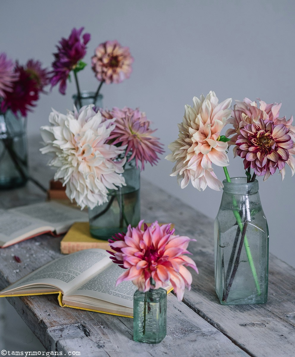 Homegerown dahlias in vintage bottles