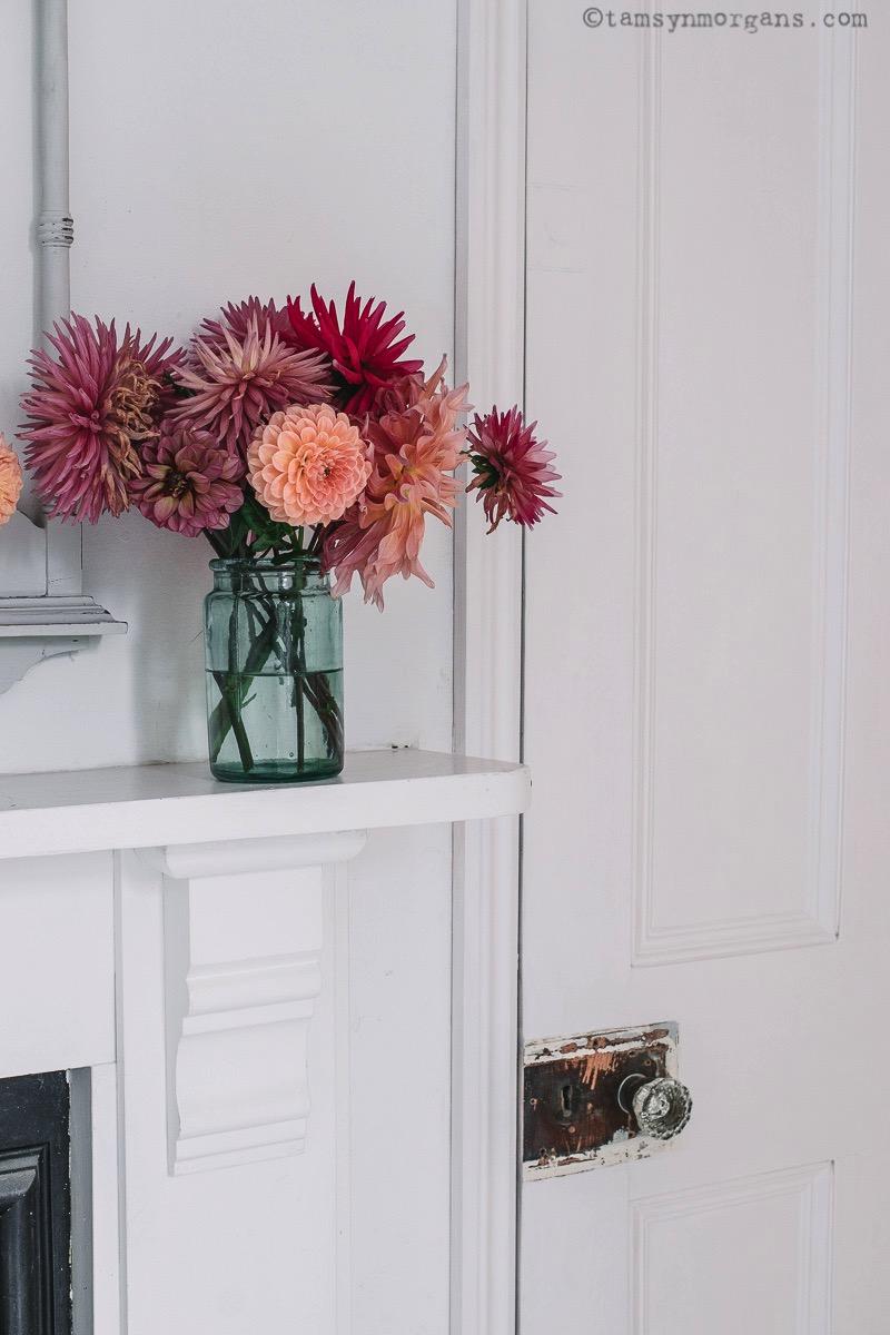 homegrown dahlias