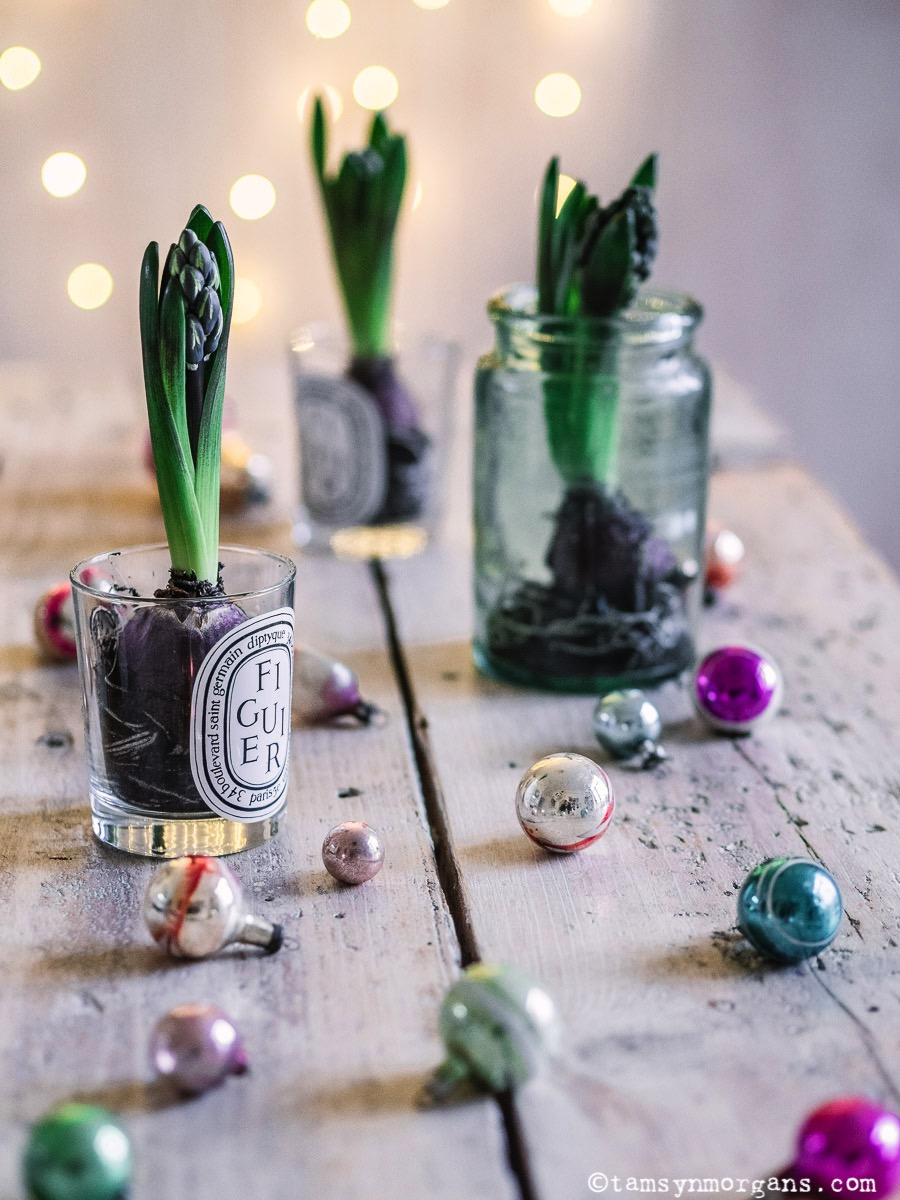 Simple jars with hyacinth bulbs