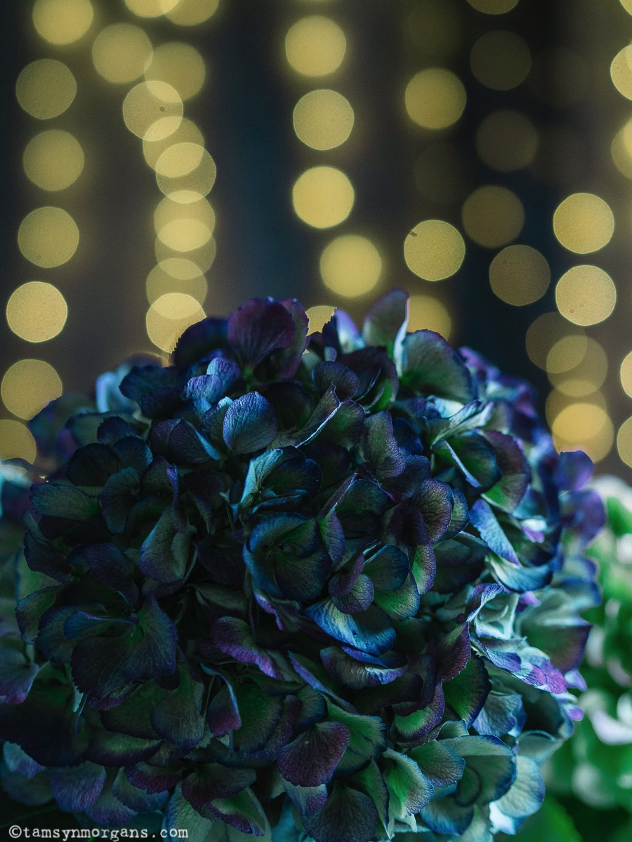 Hydrangeas with sparkly bokeh