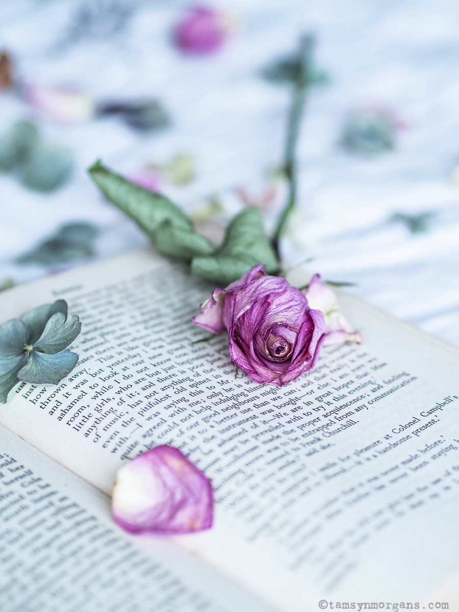 A single rose on an open vintage book