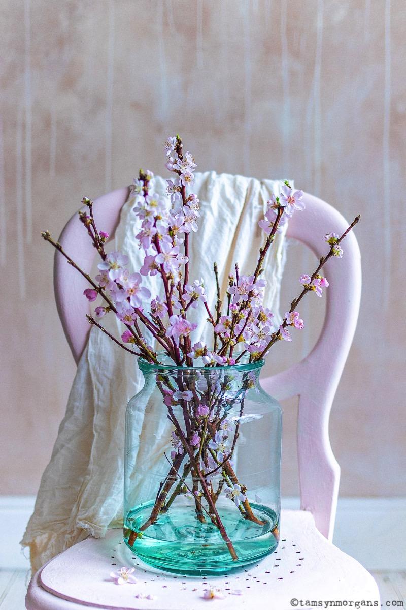 Pink blossom in vase