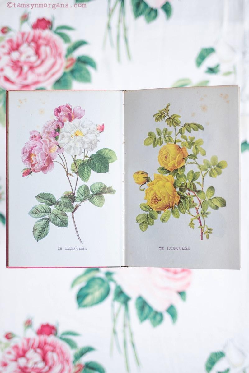 botanical prints floral prints