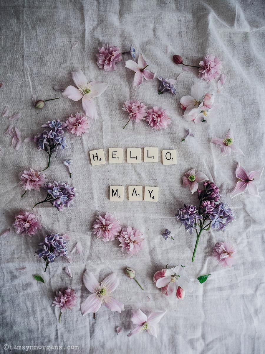 Hello May scrabble flatlay of lilac and blossom