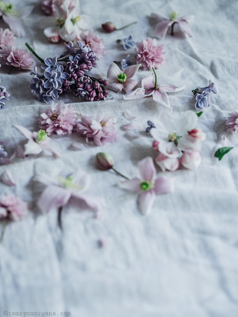 still life of lilac and blossom