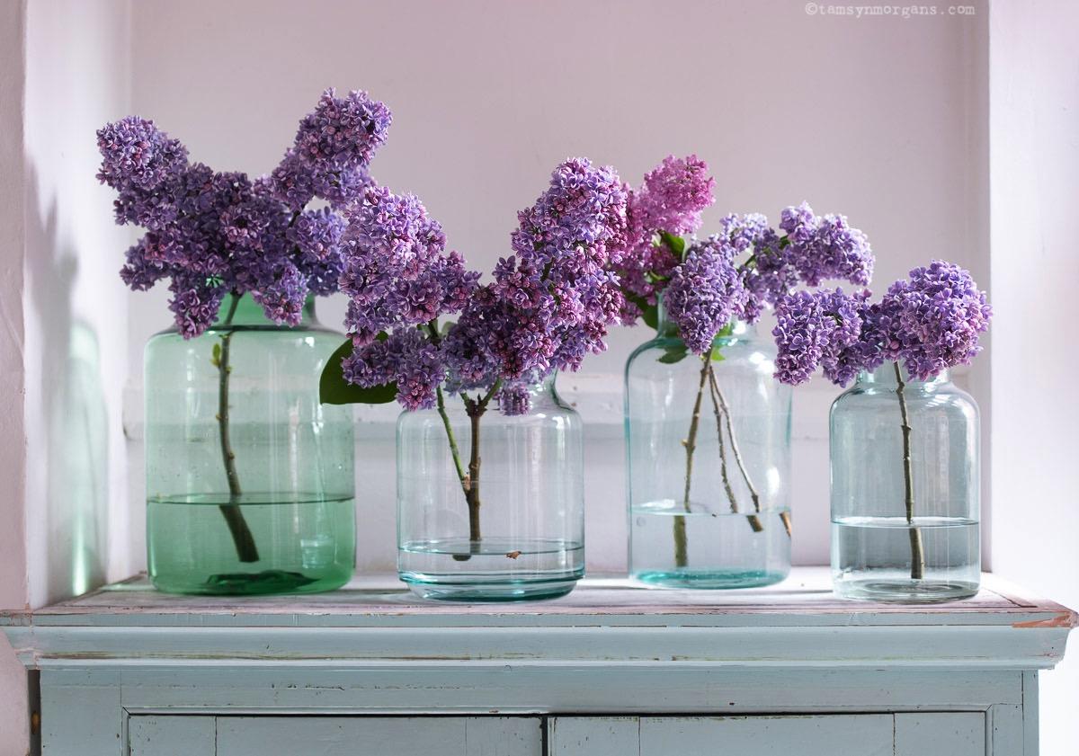 Lilacs in vintage jars