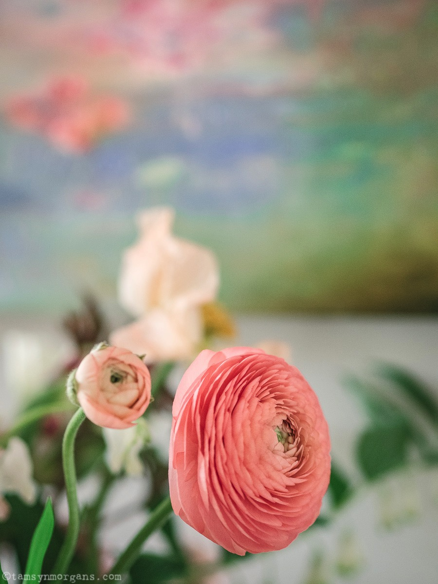 Ranunculus close up