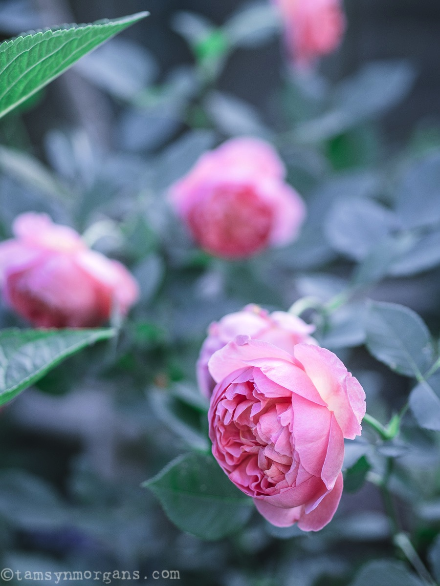 Tamsyn Morgans Floral Photography