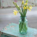 Daffodils in green glass vase