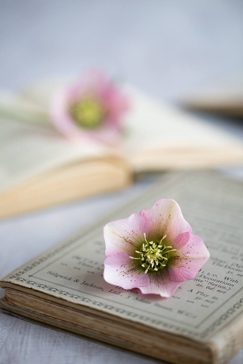 Hellebores from my garden on vintage books