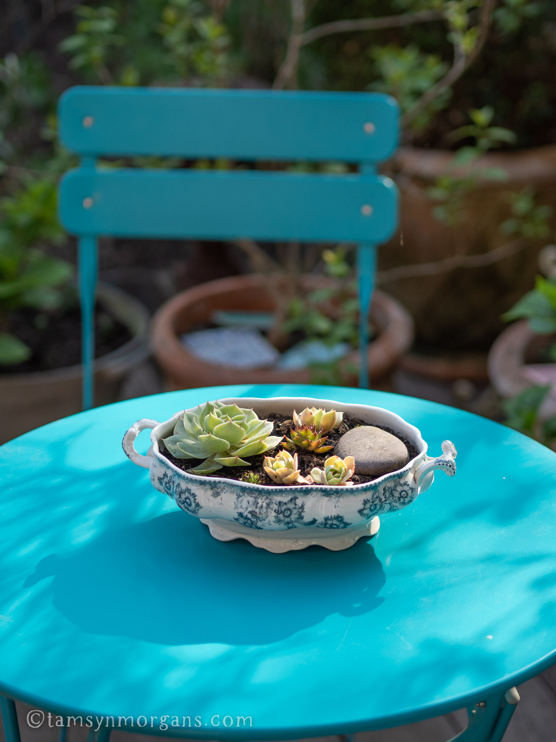 Garden table with bowl of succulents