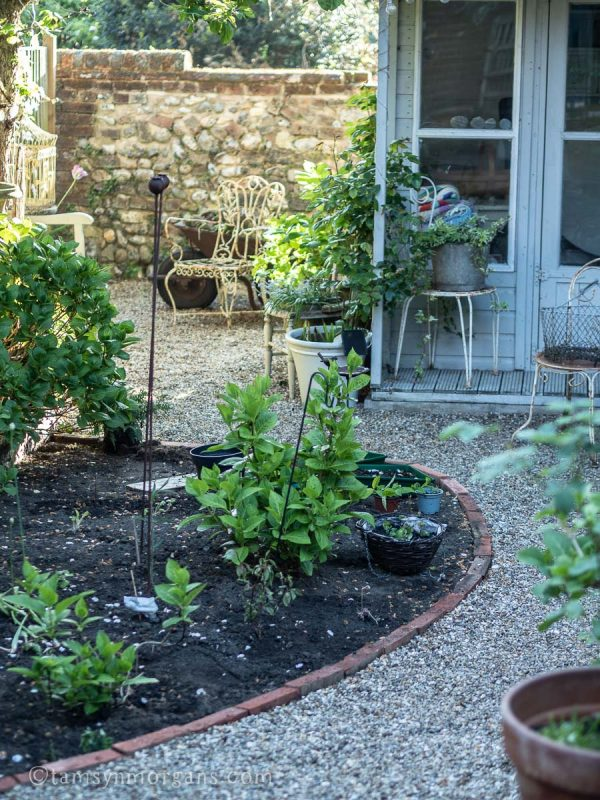 Garden makeover project