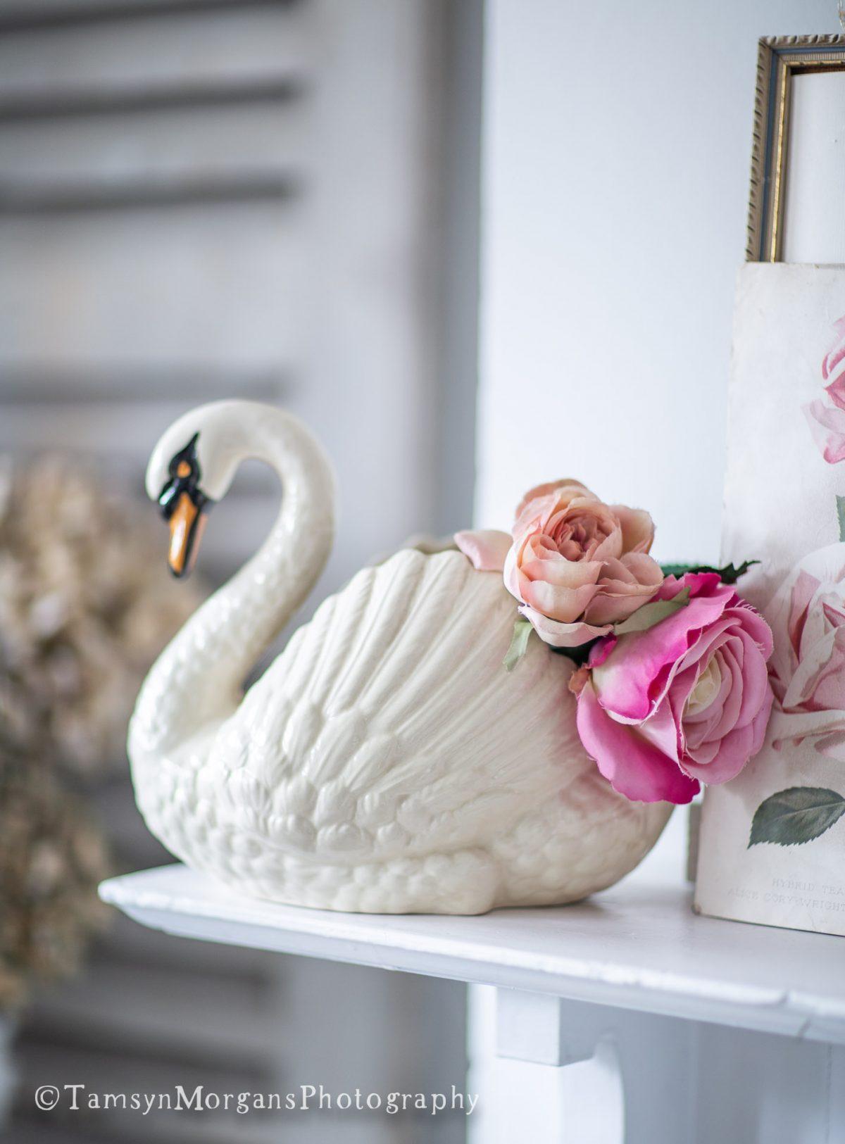 Dartmouth Swan